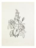 Hosta  Rhododendron  Rose