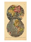 1690  World