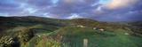 Sheep on Hillside  Combe Martin  North Devon  Devon  England