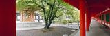 Walkway of a Temple  Sanjusangendo Temple  Kyoto City  Kyoto Prefecture  Kinki Region  Honshu  J