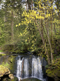 Waterfall in a Park  Whatcom Creek  Whatcom Falls Park  Bellingham  Whatcom County  Washington S