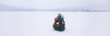 Decorated Tree in a Snow Covered Desert  Black Rock Desert  Nevada  USA