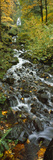 Waterfall in a Forest  Wahkeena Falls  Columbia River Gorge  Multnomah County  Oregon  USA