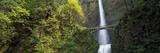 Waterfall in a Forest  Multnomah Falls  Columbia River Gorge  Portland  Multnomah County  Oregon