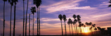 Silhouette of Palm Trees at Sunset  Santa Barbara  California  USA