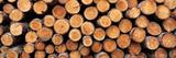 Stack of Logs in Forest  Burrator Reservoir  Dartmoor  Devon  England