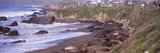 Elephant Seals on the Beach  San Luis Obispo County  California  USA