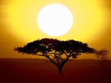 Silhouette of a Tree at Sunrise  Tanzania