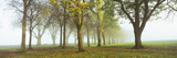 Trees in a Park During Fog  Wandsworth Park  Putney  London  England