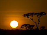 Sunset over a Forest  Serengeti  Tanzania
