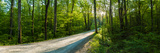 Dirt Road Passing Through a Forest  Great Smoky Mountains National Park  Blount County  Tennesse