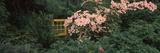 Flowering Dogwood with a Garden Gate  Anacortes  Fidalgo Island  Skagit County  Washington State