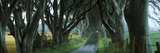 Road at the Dark Hedges  Armoy  County Antrim  Northern Ireland