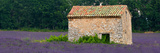 Stone Building in a Lavender Field  Provence-Alpes-Cote D'Azur  France