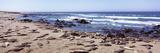 Elephant Seals on the Coast  Big Sur  California  USA