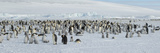 Emperor Penguins (Aptenodytes Forsteri) Colony at Snow Covered Landscape  Snow Hill Island  Anta