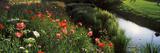 Wildflowers  Crakehall Beck  Crakehall  North Yorkshire  England