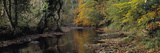 Reflection of Autumn Trees in a River  River Teign  Dunsford  Dartmoor  Devon  England