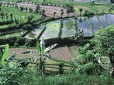 High Angle View of Rice Farming  Bali  Indonesia