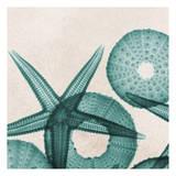Under The Sea 5 Reproduction d'art par Albert Koetsier