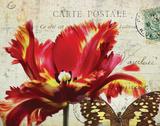 Carte Postale Tulip I