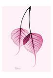 Bodhi Tree Pink