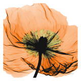 Poppy Orange