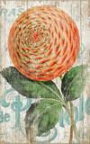 Zinnia Orange Vintage