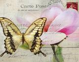 Carte Postale Magnolia I