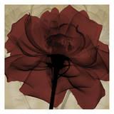 Ox Blood Rose