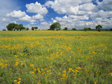 Field of Flowers and Trees with Cloudy Sky  Texas Hill Country  Texas  USA