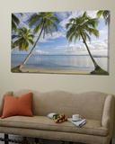 Panama  Bocas Del Toro Province  Carenero Island  Palm Trees and Beach