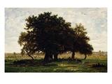 Groupe De Chênes  Apremont (Group of Oak Trees  Apremont  Forest of Fontainebleau  France)