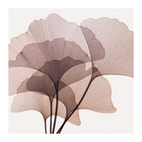 Gingko Leaves II