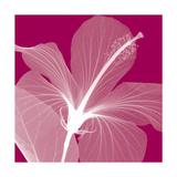 Hibiscus/White