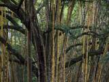 Bamboo and Trees at Punta Caletas Reserve in Costa Rica