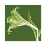 Lilies B (Negative)