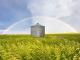 A Rainbow over a Grain Silo and Wheat Field after a Thunderstorm