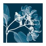 Hydrangeas A (Negative)