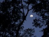 View of the Moon Through Trees in the Evening