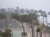 Palm Trees in the Wind and Rain as Hurricane Irene Makes Landfall