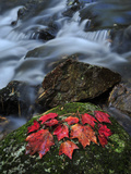 Colorful Leaves on a Stream-Side Rock