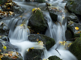 A Mountain Creek Running over Mossy Stones in Little Waterfalls