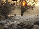 A Couple Walk in the Winter in Richmond Park Papier Photo par Alex Saberi