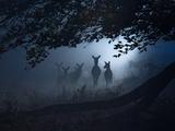 Red Deer, Cervus Elaphus, Gathering on a Misty Morning Papier Photo par Alex Saberi