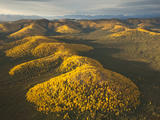 Poplars and Tundra in Fall Colors