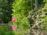 A Springtime View of Plants Blooming Along the Side of a Pond