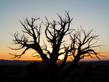 A Silhouetted Tree at Sunset