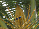 A Red-Legged Honeycreeper Lands on Tropical Plants