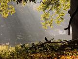 A Western Jackdaw  Corvus Monedula  in a Misty Autumn Landscape